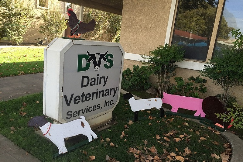 Dairy Veterinary Services